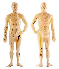 Akupunkturpuppe mit Meridianen und Akupunkturpunkten